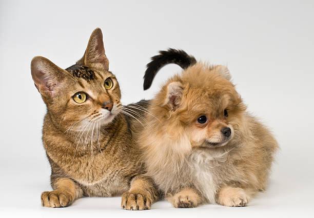 Cat and puppy in studio picture id178392111?b=1&k=6&m=178392111&s=612x612&w=0&h=ivl9fjttp1xdkdhekpwvw1carvupsuexjkzlq8stcdq=
