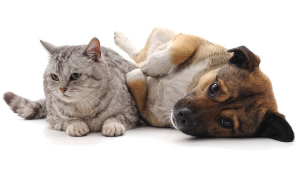 Cat and puppy picture id1010203550?b=1&k=6&m=1010203550&s=612x612&w=0&h=8wlmvmhmass4 sktchli1n7qphtpqrbwwzfvegupk9o=