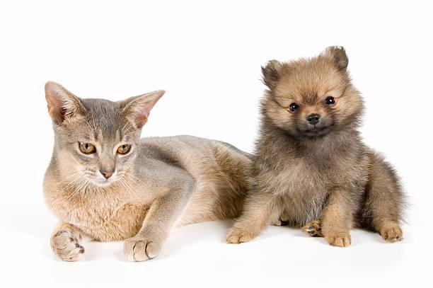 Cat and puppy picture id144283617?b=1&k=6&m=144283617&s=612x612&w=0&h=dzuxecoegmrcyhakzec0gar7siajrw9lsfay3cifh00=