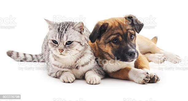Cat and puppy picture id502226798?b=1&k=6&m=502226798&s=612x612&h=ev39mcqnbi06ztn6jw4bamdv6f8toj5f2g1h q8ymdi=