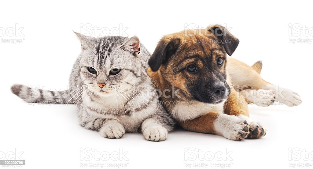 Cat and puppy. stock photo