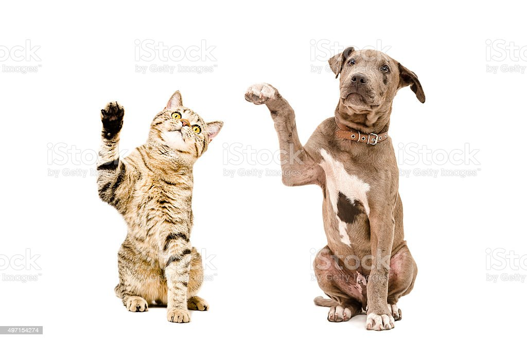 Cat  and  puppy sitting together with raised paws stock photo
