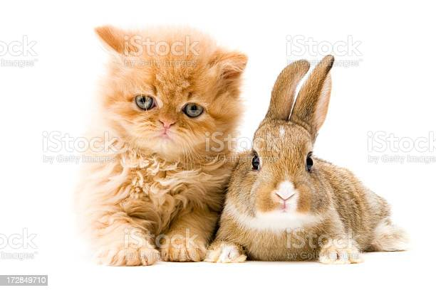 Cat and rabbit picture id172849710?b=1&k=6&m=172849710&s=612x612&h=jwr3ubqbcnkscirfu5mfuvr4a4i7izyydt36uvtlhtm=