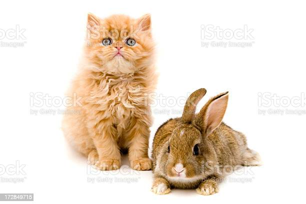 Cat and rabbit picture id172849715?b=1&k=6&m=172849715&s=612x612&h=l6ypgepiakhwmncjsic i0dlwpziod7rc5cmyyqi6mm=