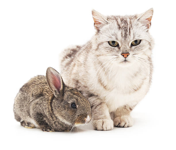 Cat and rabbit picture id538576780?b=1&k=6&m=538576780&s=612x612&w=0&h=6 t8o3tpjbw 6ausamap qtv07elckmtytbibkiqt3a=