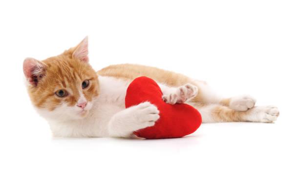 Cat and red heart picture id914802780?b=1&k=6&m=914802780&s=612x612&w=0&h=d6ct4y zzb2gg5vzvpda qoyhri5f4aq5ipdtsuvcau=