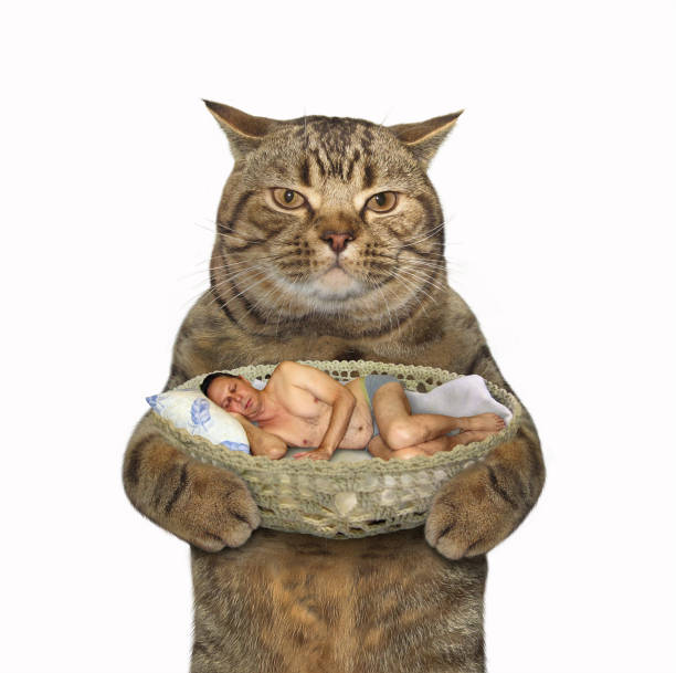 Cat and sleeping man picture id870715014?b=1&k=6&m=870715014&s=612x612&w=0&h=gc9jyvmzuvpmlpwki5eckn0cgyli9 1xvl13ctheo0q=