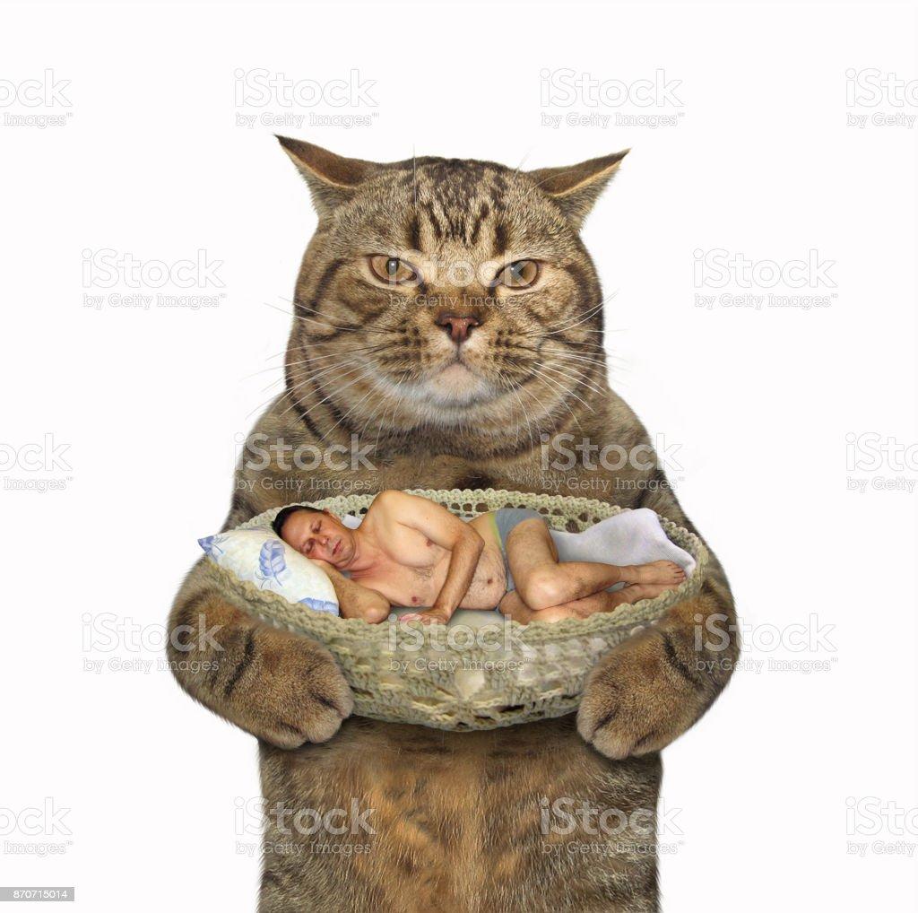 Cat and sleeping man stock photo