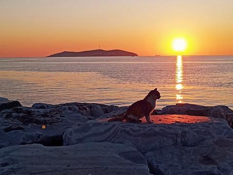 Cat and sunset at anatolian side coast of marmara sea istanbul turkey