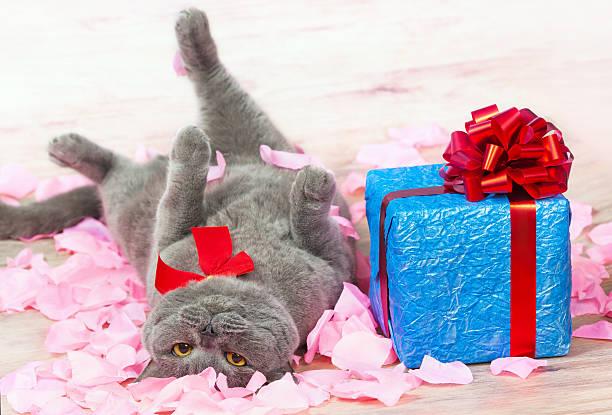 Cat and the gift picture id161893161?b=1&k=6&m=161893161&s=612x612&w=0&h=eilnto3dhlvbyikjoeeyug 5jswzy2sfxv3kdlxxiaa=