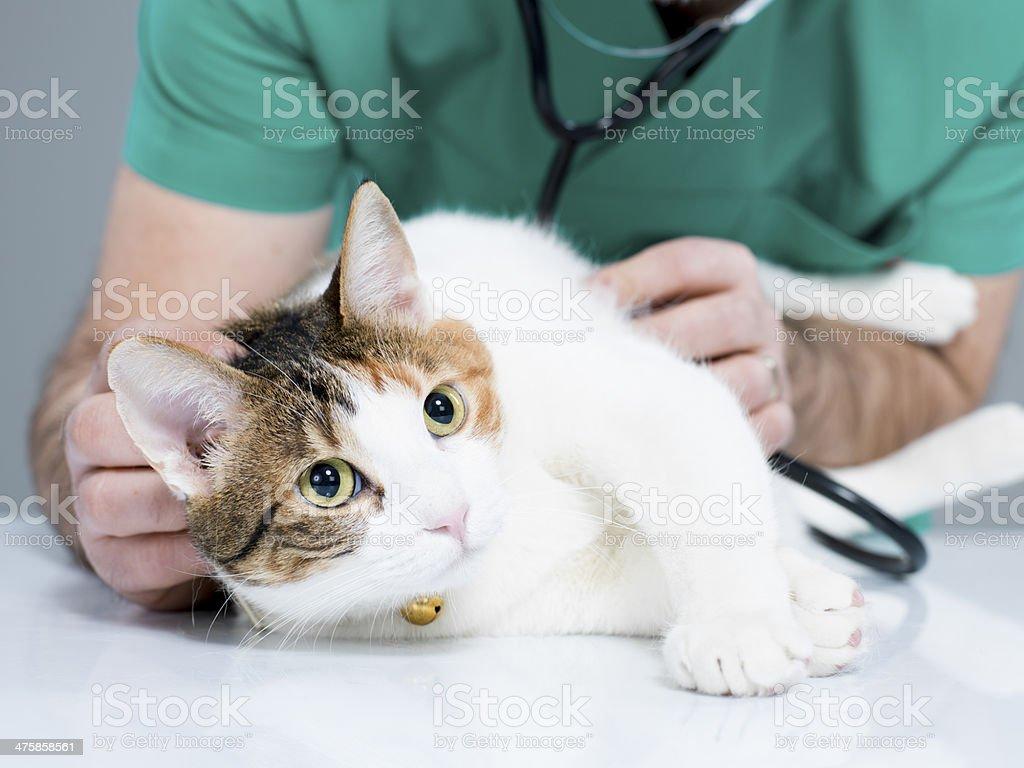Katze und Tierarzt – Foto