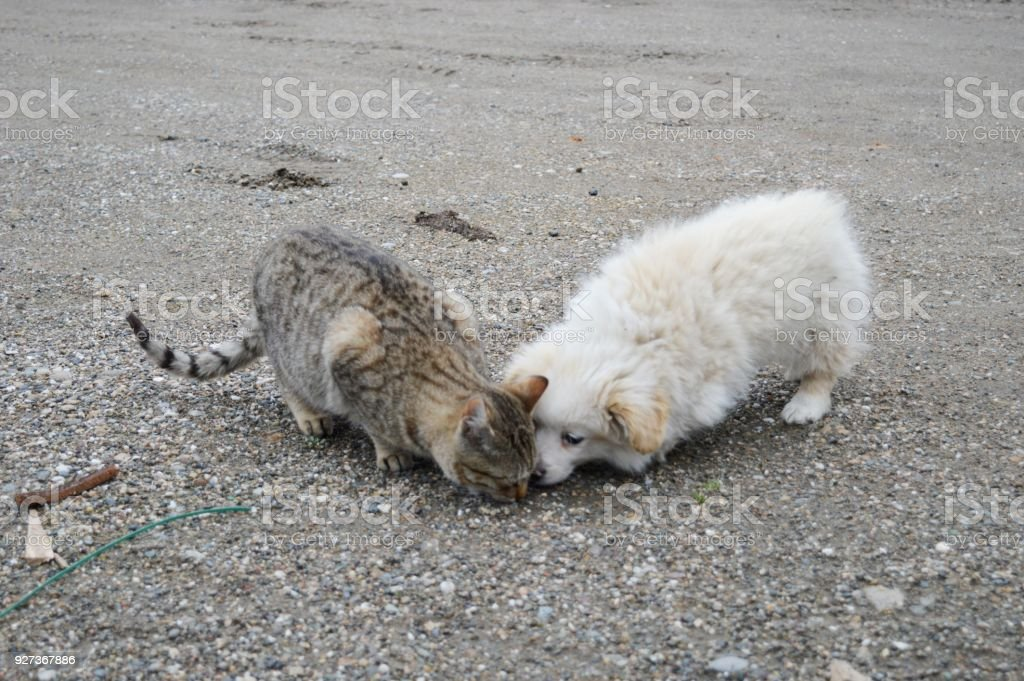 cat and white puppy - Royalty-free Animal Stock Photo
