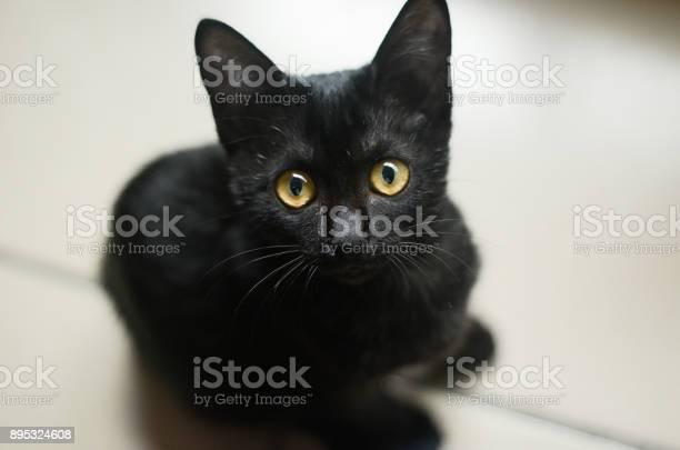 Cat animal pet kitten black picture id895324608?b=1&k=6&m=895324608&s=612x612&h=6svv5d8uv2ep6csyzyqafned7ev0mr7619nvdzce ke=