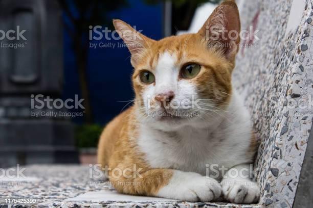Cat animal picture id1175425399?b=1&k=6&m=1175425399&s=612x612&h=51fqnvembtpgak26gb3fvgvxh n8mds0r5u1pf8b8x4=