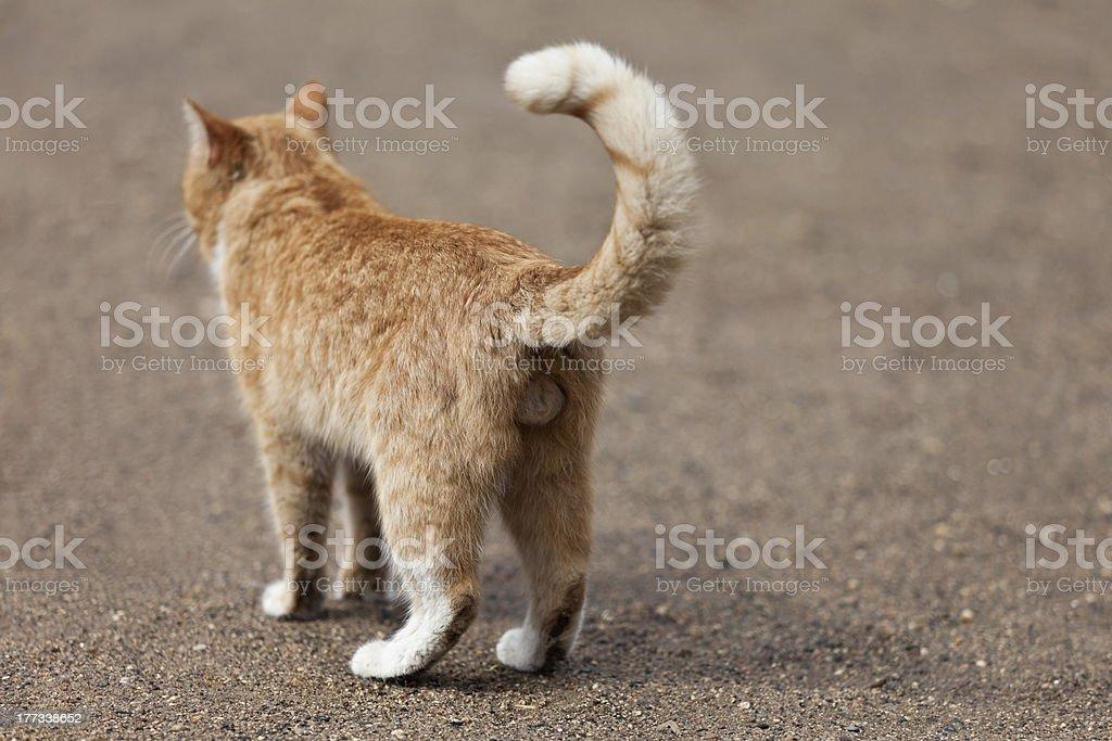 Cat Tier – Foto