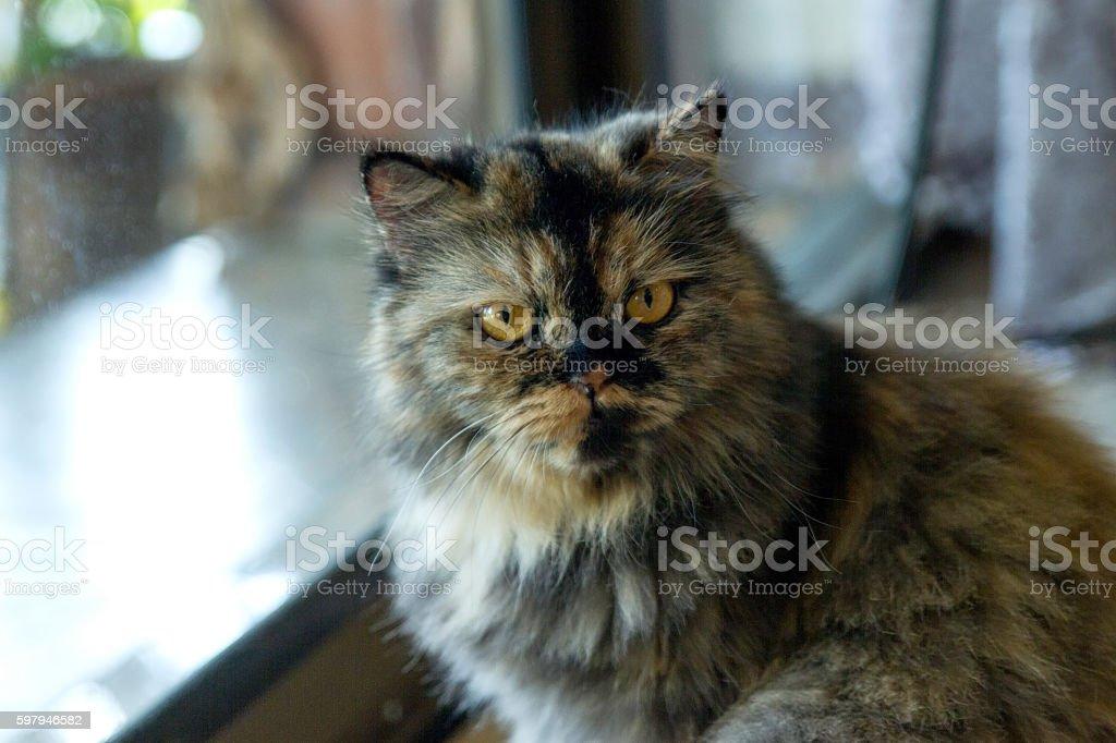 Gato animal foto royalty-free