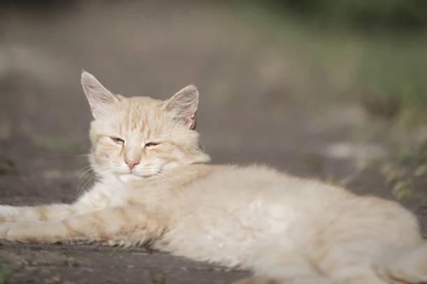 Cat animal portrait. Domestic pet kitten stock photo