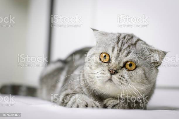 Cat are squat on white bed in the room picture id1074072072?b=1&k=6&m=1074072072&s=612x612&h=fqroyfaqulkdvgvx5mb11o7c0gq0olw3  z9plmbfew=
