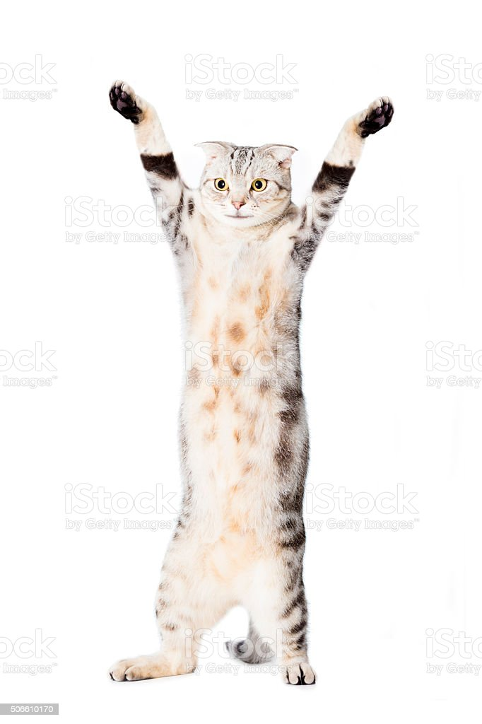 cat are standing and rising hand stock photo