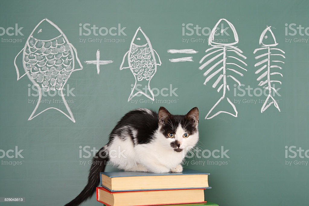 Cat arithmetic stock photo