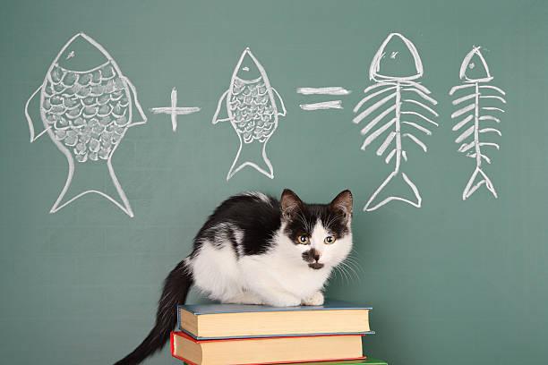 Katze Wer möchte – Foto