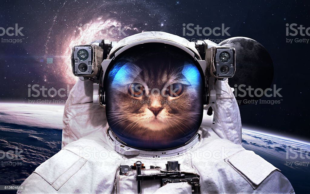 Cat Astronaut in outer space. Spacewalk. Elements of this image stock photo