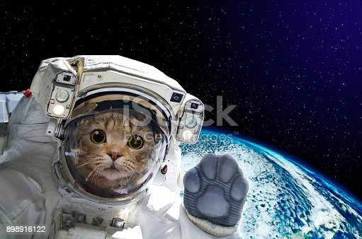istock Cat astronaut in space on background of the globe. Elements of this image furnished by NASA 898916122