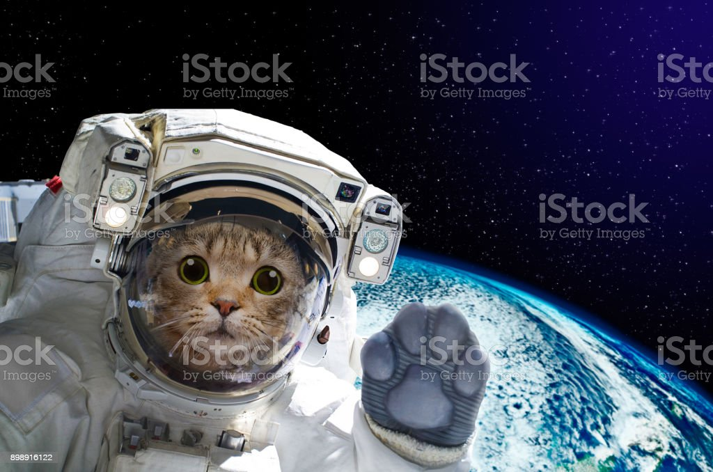 Cat astronaut in space on background of the globe. Elements of this image furnished by NASA – zdjęcie
