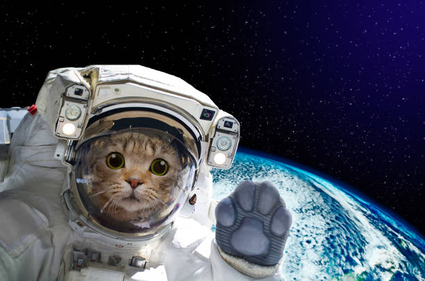 cat astronaut in space on background of the globe. elements of this image furnished by nasa - humor stock photos and pictures