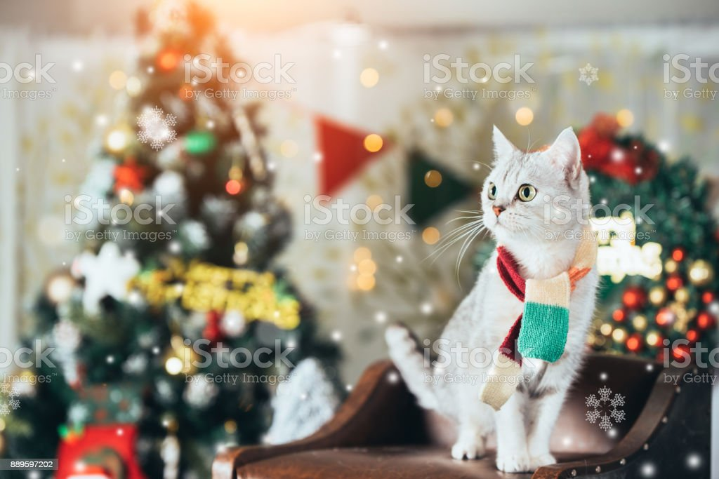A cat at Christmas background stock photo
