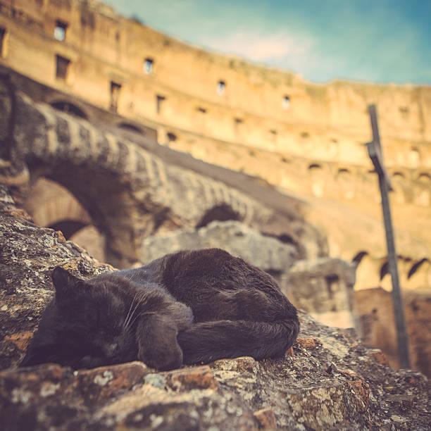 Cat at colosseum rome picture id523156822?b=1&k=6&m=523156822&s=612x612&w=0&h=  ilpdgd bzq8vwaswbmk7kaqjp6xspdhk06np t6mm=