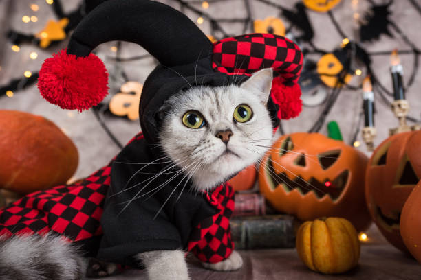 Cat at halloween background picture id864371468?b=1&k=6&m=864371468&s=612x612&w=0&h=dow3supzvosoxf0jzjic oxn3fhxke8iwrywj3ljkju=