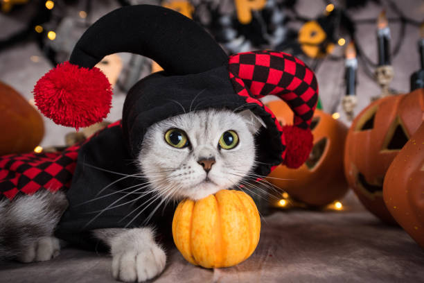 Cat at Halloween background A cat in clown clothing at the background of halloween pet clothing stock pictures, royalty-free photos & images
