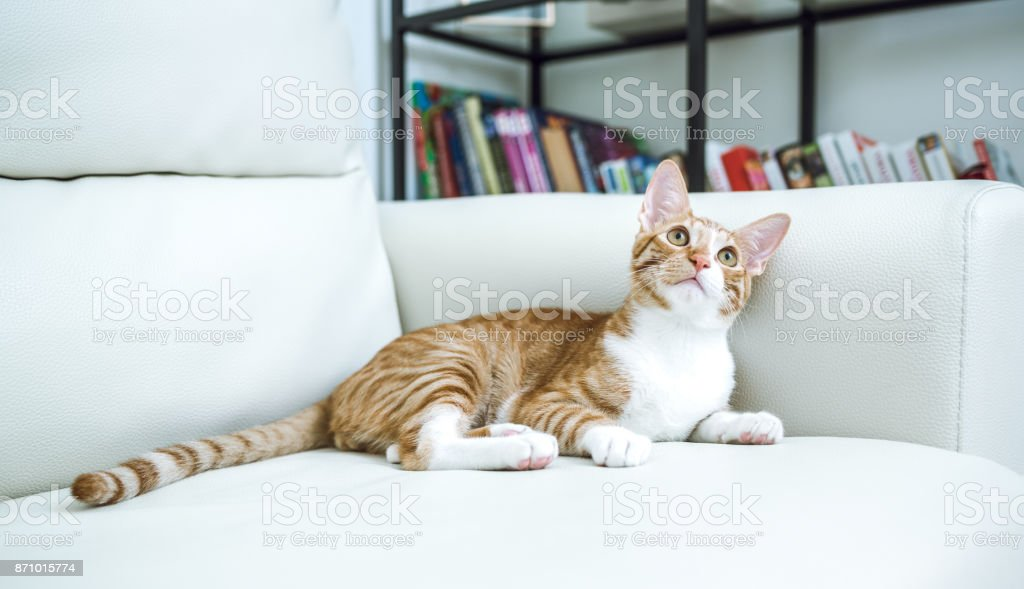 Cat at home stock photo