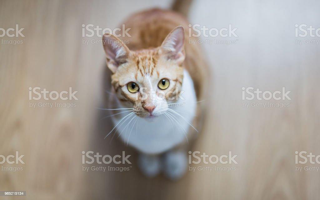 Cat at home zbiór zdjęć royalty-free