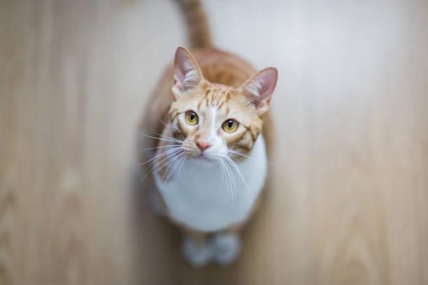 Katze wie zu Hause fühlen. – Foto