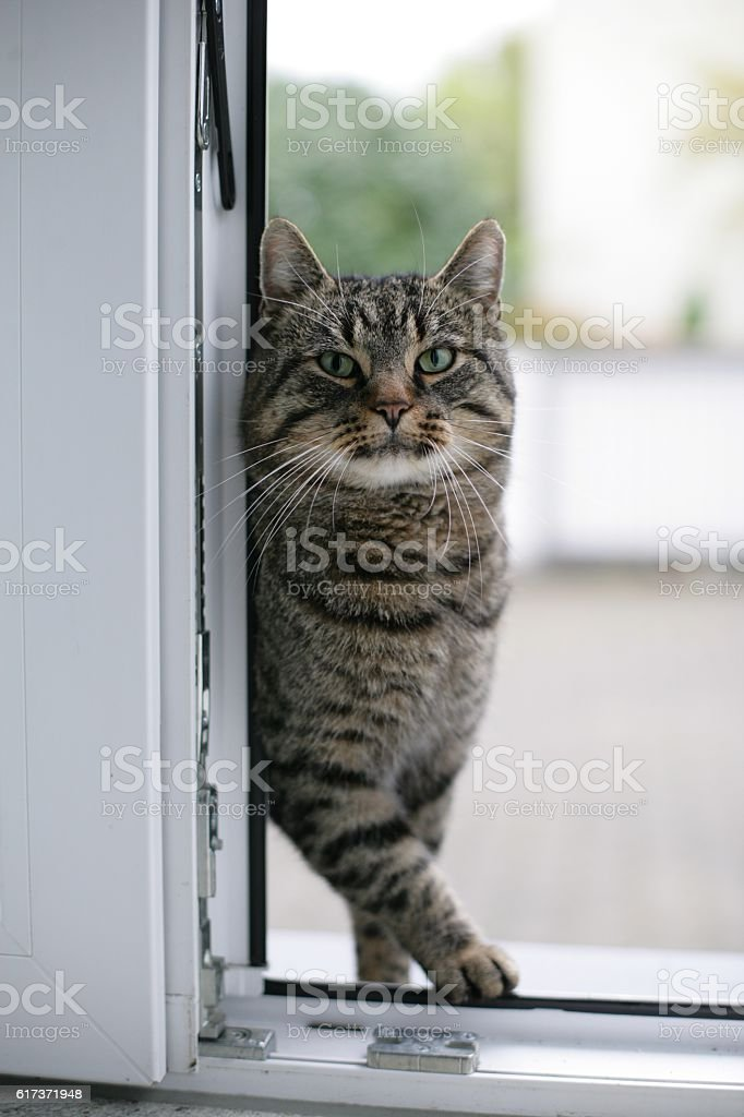 Cat at kitchen door stock photo