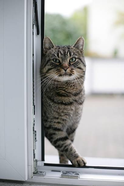 Cat at kitchen door stock photo
