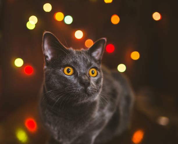 Cat at new years eve picture id1171504992?b=1&k=6&m=1171504992&s=612x612&w=0&h=iiba3tythf4je76ckie7lcaiyqzcuj1cpkc3eiwrkru=