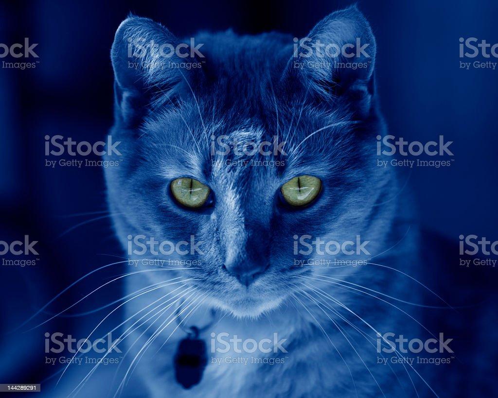Cat at night stock photo