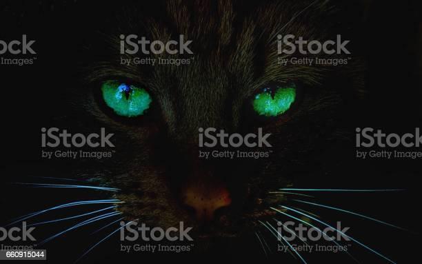 Cat at night with glowing green eyes picture id660915044?b=1&k=6&m=660915044&s=612x612&h=6i5he0aumctdjr6x1tjjwcvlmheuwq fygbxgurwpja=