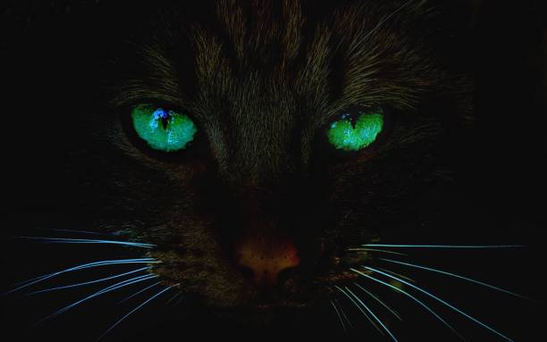 Cat at night with glowing green eyes stock photo