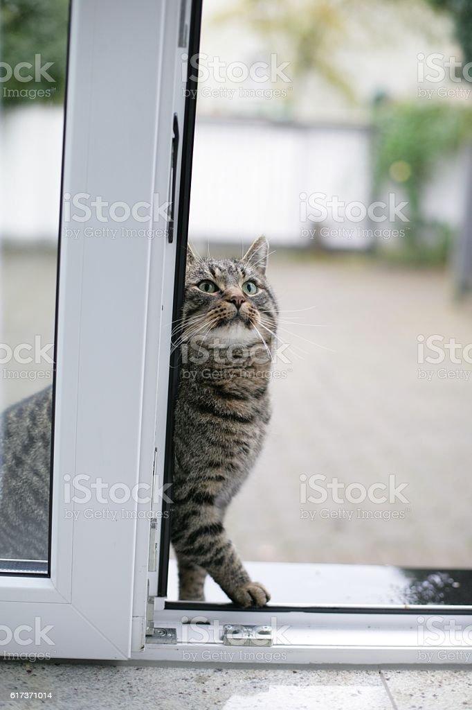Cat at the door stock photo