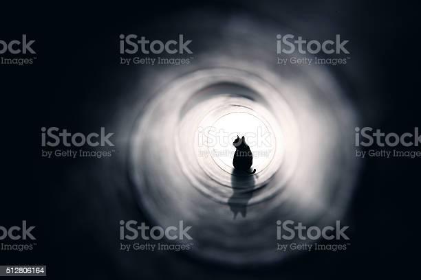 Cat at the end of a tunnel picture id512806164?b=1&k=6&m=512806164&s=612x612&h=f0sgtuk 0bm 3nusm7z0src x28 njgsyvw0fhl0qyq=
