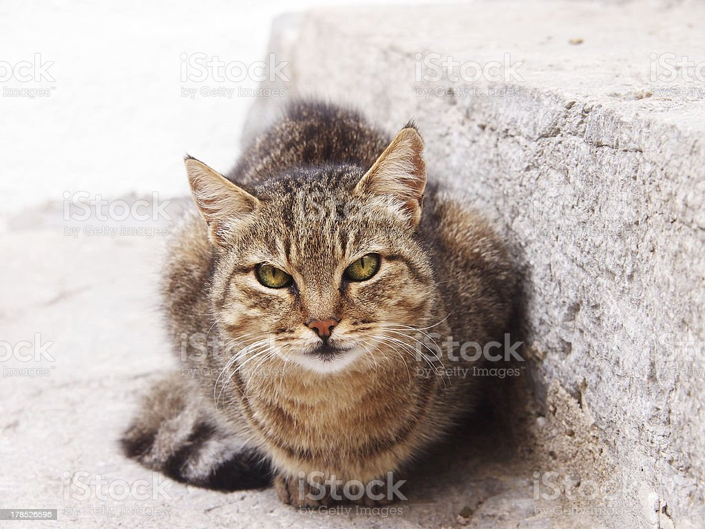 cat at the stone stair stock photo