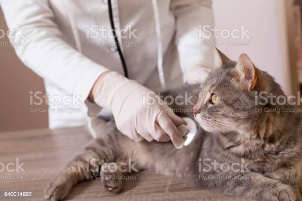 Cat at vets office picture id640014662?b=1&k=6&m=640014662&s=612x612&h=ippvdh1tpn aqerb3spybmbjid4vpnzntdultnww 4a=
