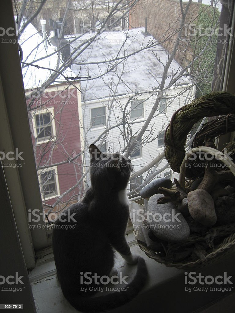 Cat at window royalty-free stock photo