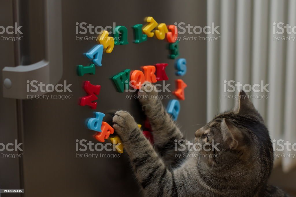 Cat at work stock photo