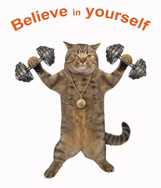 Cat athlete lifts dumbbells stock photo