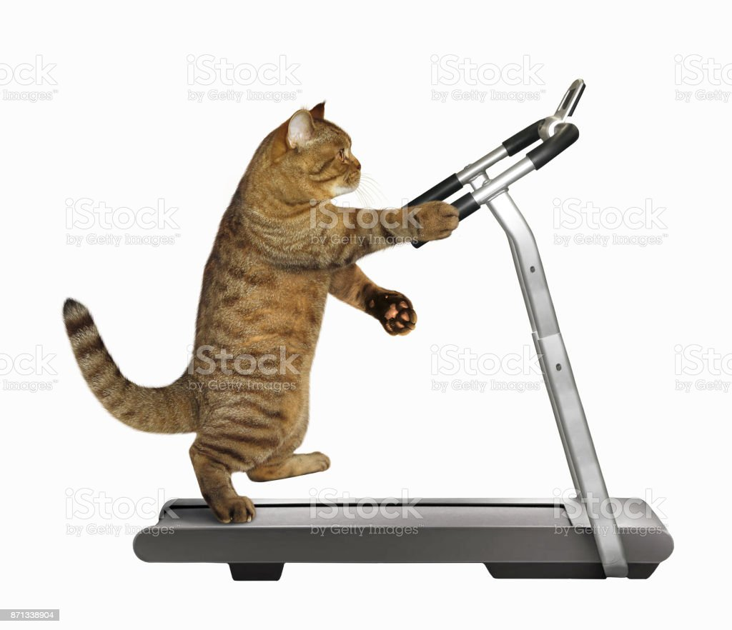Cat athlete on a treadmill stock photo